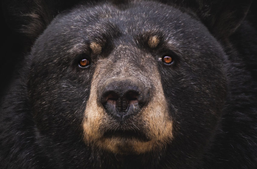 What can invalidate the short-term bear scenario for Bitcoin?
