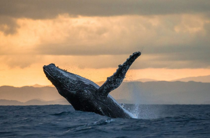 No, A Whale Didn't Cause Bitcoin To Crash Overnight