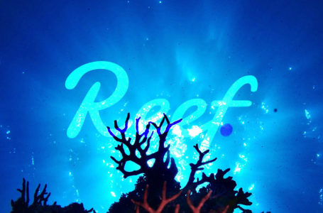 Reef Finance is iterating the 'IDO' Model with new ReefStarter Platform