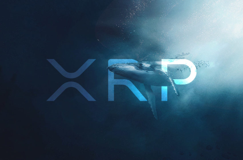 Ripple reports strong XRP whale accumulation despite ongoing SEC lawsuit