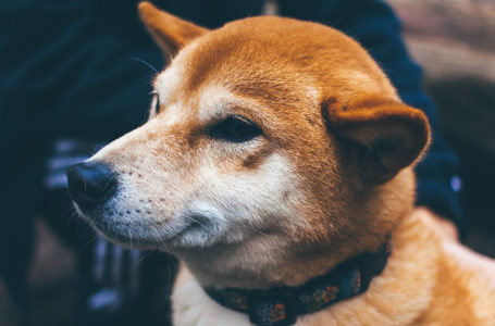 Thai SEC orders exchanges to delist Dogecoin, Shiba Inu, NFTs, and 'fan' tokens